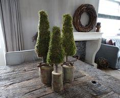Advent, Xmas Decorations, Country Decor, Cactus Plants, Merry Christmas, December, House, Home Decor, Centre