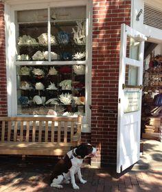 pinner: The Hub now has a coffee bar! Perfect! Main Street, Nantucket