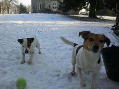 Pepper & Trix, de ballen Jack Russells van chateaulaperche.com #vakantie #frankrijk