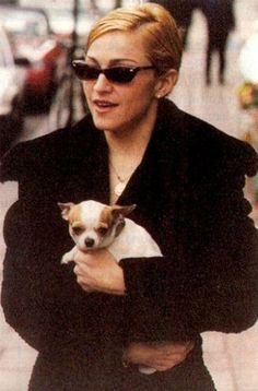 3274ddfc13df Madonna is listed (or ranked) 4 on the list 25 Celebrities Who Have  Chihuahuas