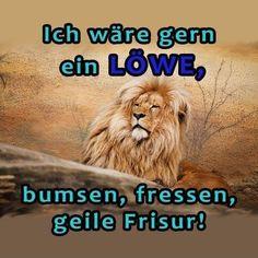 Ich wäre gerne ein Löwe