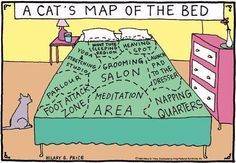 A cat's map of bed.