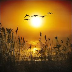 Stunning landscape & nature images, quotes I love and poetry that has befriended my spirit. Waterfowl Hunting, Duck Hunting, Hunting Dogs, Beautiful Sunset, Beautiful Birds, Beautiful World, Beautiful Pictures, Duck Season, All Nature