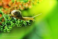 Untitled by blueboss123 #nature #photooftheday #amazing #picoftheday