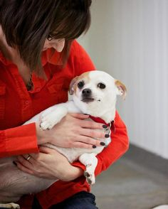 Sadie is currently available for adoption! Please click on her picture for more information!