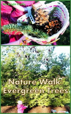Christmas Trees Nature Hunt. Evergreen Trees: Nature Walk Activities for Kids. Experiencing the trees and connecting with the nature (even for a short while) is wonderful!