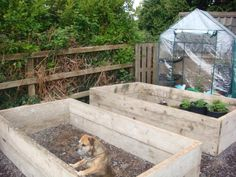 Raised beds made from untreated scaffolding planks