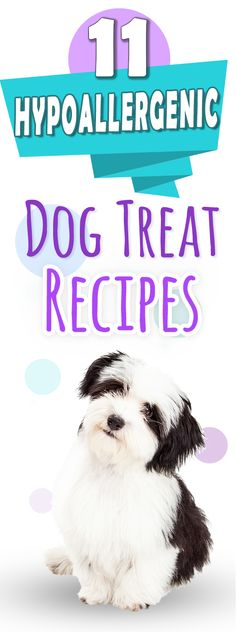Allergy safe dog treat recipes - perfect hypoallergenic homemade treats for dog's with skin sensitivities or allergic reactions