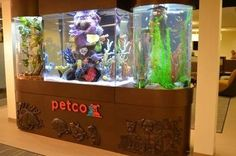 Crazy aquariums on Tanked on Animal Planet