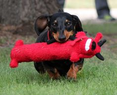 Oh yeah - I got my red Bobo... And let's time how long before it's destroyed!