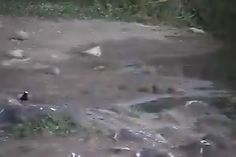 Petes pond