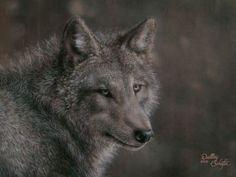 Wolf (Acrylic, 2015)