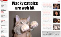 """This article over on The Sun, entitled """"Wacky cat pics are a web hit,"""" is an article from today, which happens to fall in the year 2012. The article only has a few sentences written up, followed by a handful of the mentioned """"wacky cat pics."""" As anyone who has an Internet connection knows, these """"wacky cat pics"""" are LOLcats, and have been a cornerstone of the Internet for roughly ever. So, either we're looking at a humorously out of date article, or we're looking at one of the greatest trolls of"""