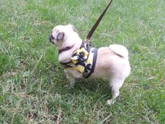 Small Dog Harness Pattern  Pugston Two Step by BottomOfMyHearts, $8.00