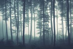 sea-of-trees-forest-wallpaper-mural