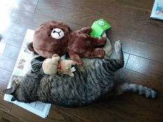 Today's cat on 8th July, 2012 by ganchan2, via Flickr