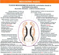 Mesodermo Nuevo Sustancia Blanca Nueva Medicina Germanica Hamer 3ra Ley Sistema Ontogenetico