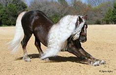 Horses:  A Schwarzwälder Fuchs horse.