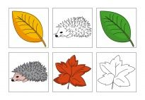 Bring creativity into your classroom with new lesson topics every week. Innovative, active learning ideas by subject, theme, month, and more. Fall Leaves Pictures, Picture Cards, Learning Activities, Autumn Leaves, Elementary Schools, Hedgehog, Children, Creative, Kindergarten Fun