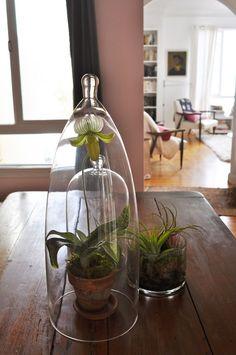 glass plant