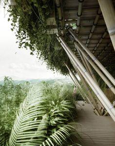 Arquitectura con bambu