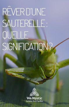 Signification Symbolique De La Sauterelle : signification, symbolique, sauterelle, Idées, Rêves, Signification,, Reve,, Signification