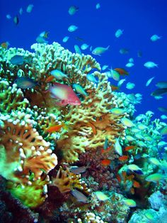 Coral reef in Dahab. This entire place looks amazing!