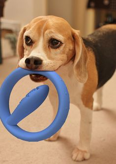 Innovative Chew Toy Offering Playful Pet Design for Brushing Teeth Dog Teeth, Old Dogs, Teeth Cleaning, Animal Design, Dog Accessories, Dog Toys, Dog Life, Puppy Love, Best Dogs