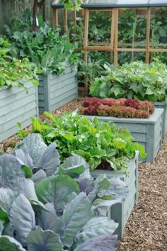 Raised beds of painted wood