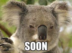 Soon -  Soon  Kunning Koala