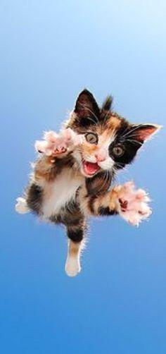 #Quelle: Bored Panda -- sethcasteel #cat kitty cute funny