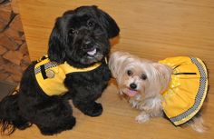 Tasha and I looked pawsome at the DPFamily NYC themed anniversary party in our Chicka-Bow-Wow's taxi outfits.