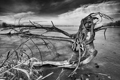 Wooden cove currently iced over.  Looking for something to photograph with my new camera and lens.  I decided Lake Manwa in Council Bluffs Iowa would be a good place to start.  This time of year the lake freezes over.  Naturally some things dont get the same ice cover.  Like this tree stump that had fallen over years ago. Taken with the FujiFilm Xt2 and the Rokinon 12mm f2.0.  I may start calling it the Rokinon 12mm f-what.