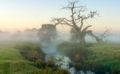 рассвет, река, деревья, туман, пейзаж