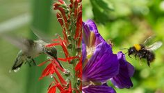 Birds vs. bees: Study helps explain how flowers evolved to get pollinators to specialize