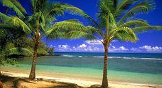 tropical beach wallpaper - Google zoeken