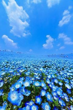 """""""Beautiful"""" blue flowers blue flowers – Famous Last Words Blue Flowers, Wild Flowers, Beautiful World, Beautiful Places, Belle Photo, Amazing Nature, Pretty Pictures, Beautiful Landscapes, Aesthetic Wallpapers"""