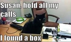 Susan, hold all my calls I found a box - LOLcats is the best place to find and submit funny cat memes and other silly cat materials to share with the world. We find the funny cats that make you LOL so that you don't have to. Funny Animal Memes, Cute Funny Animals, Funny Animal Pictures, Cat Memes, Funny Cute, Cute Cats, Hilarious Pictures, Funny Memes, Fancy Cats
