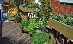 Arquitetura Sustentavel: Aprenda a fazer uma horta orgânica dentro de casa