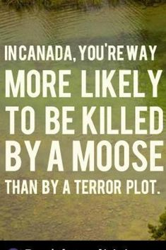 In Canada. Group Uses Moose In Ad To Oppose Harper's Anti-Terror BillMeanwhile In Canada. Group Uses Moose In Ad To Oppose Harper's Anti-Terror Bill Canadian Facts, Canadian Memes, Canadian Things, I Am Canadian, Canadian History, Canada Jokes, Canada Funny, Canada Eh, Meanwhile In Canada