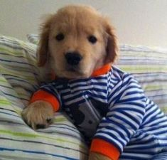 Puppies In Pajamas 29