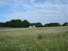 New Festival Wedding Venue: Secluded Meadow, Woodland & Tipi - Essex/Suffolk Border Wedding Venues Essex, Tipi Wedding, Wedding Ideas, Festival Wedding, Woodland, World, Travel, Brides, Teepees