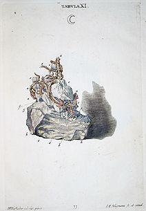 Plansje fra boken
