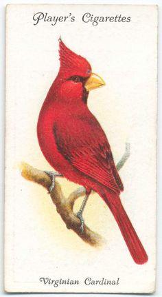 Virginian Cardinal - John Player & Sons -- Publisher - NYPL