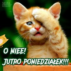 Jutro poniedziałek! Weekend Humor, Lol, Good Mood, Cat Love, Cherry Blossom, Cute Cats, Good Morning, Funny Pictures, Cute Animals