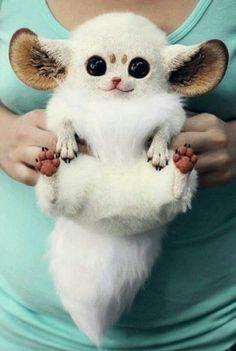Inari fox stuffed animal.