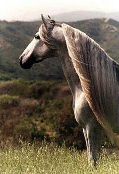 Pretty long horse mane.