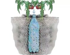Well here's a good idea for watering plants. Underground Self Watering Recycled Bottle System - Potted Vegetable Garden Lif. Veg Garden, Lawn And Garden, Vegetable Gardening, Garden Plants, Garden Water, Garden Chips, Organic Gardening, House Plants, Vegetables Garden