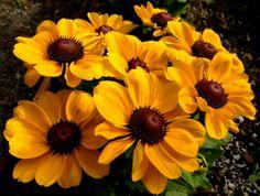 Yellow Ecosystem #2 by Graham Richard 高健 Cloke, via 500px