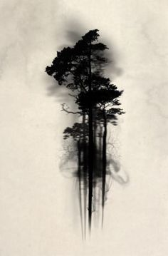 print on steel Illustration forest wood woods mist fog watercolor tree trees floating mystical enchanted magic horror scary